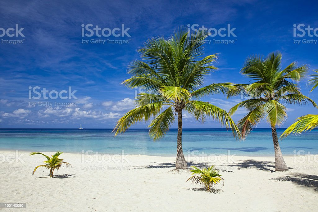 Palm trees on tropical beach royalty-free stock photo