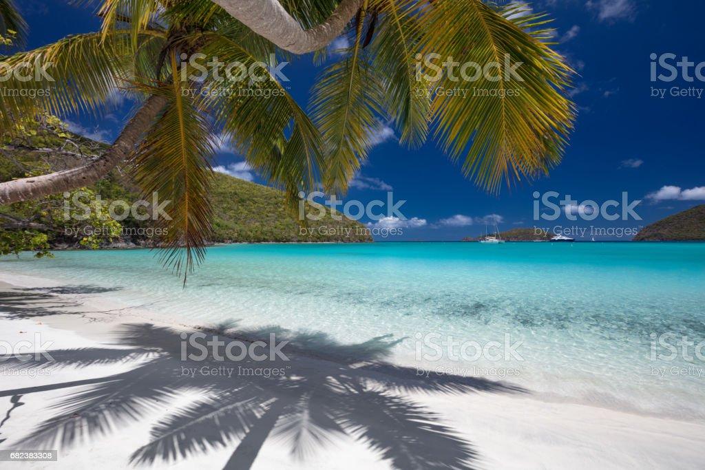 Palm trees on tropical beach zbiór zdjęć royalty-free