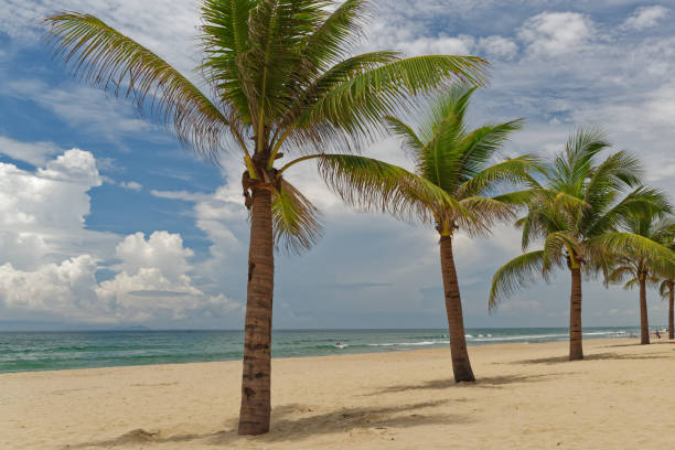 Palm trees on tropical sandy beach against cloudy sky stock photo