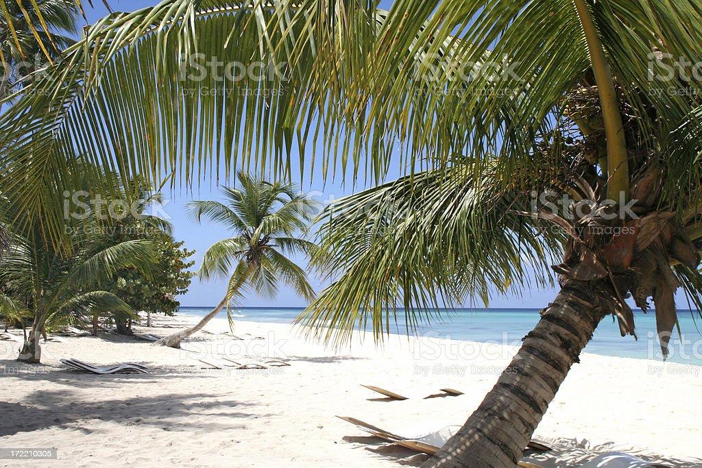 Palm trees on white beach # 2 royalty-free stock photo