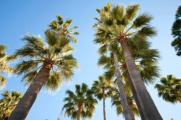 Palm trees over bright blue sky on a sunny morning