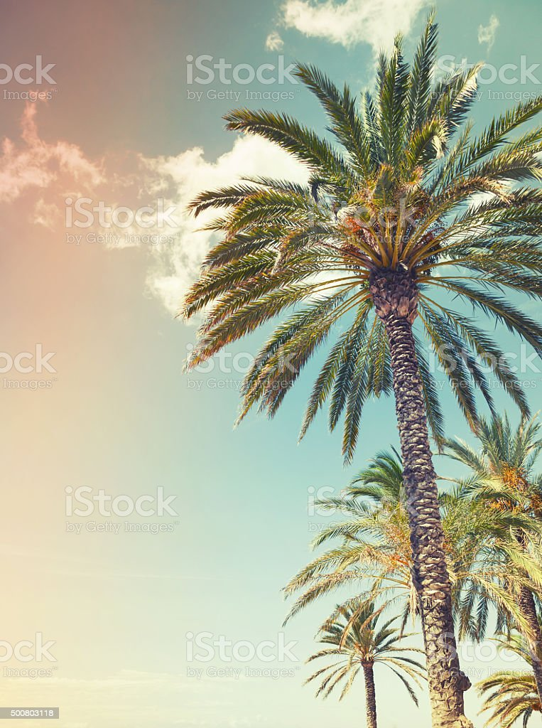 Palm trees over cloudy sky background, old style stock photo