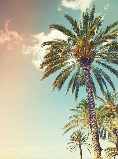 Royalty Free Palm Tree Pictures, Images and Stock Photos ...