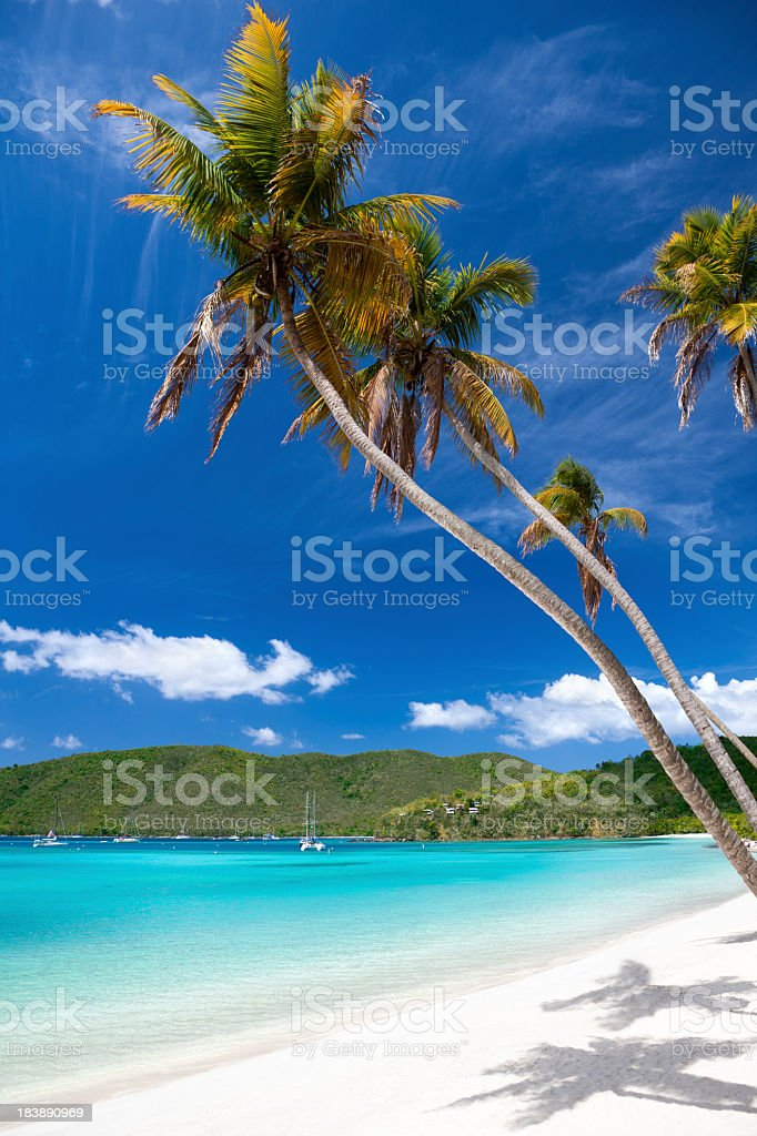 palm trees overhanging a tropical beach in the Virgin Islands royalty-free stock photo