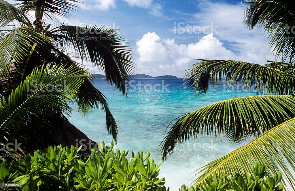 Palm trees overlooking the sea 免版稅 stock photo