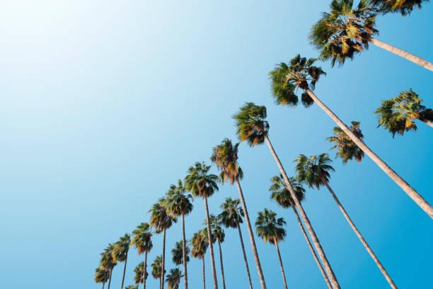 palmer - palm bildbanksfoton och bilder