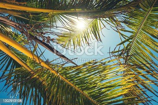 1145102719 istock photo Palm Trees 1202913106
