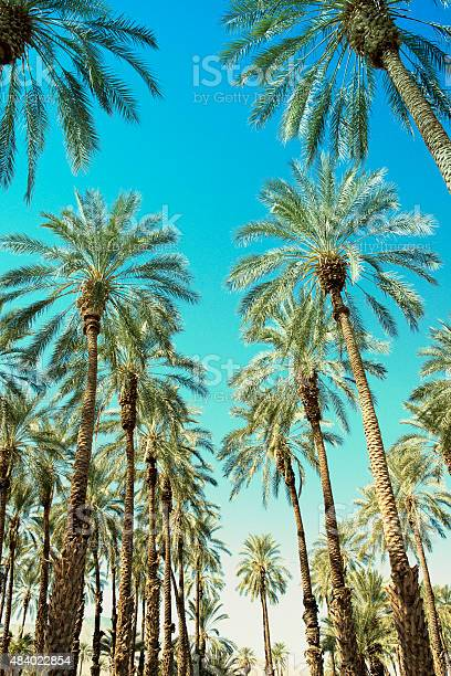 Palm Trees Stock Photo - Download Image Now