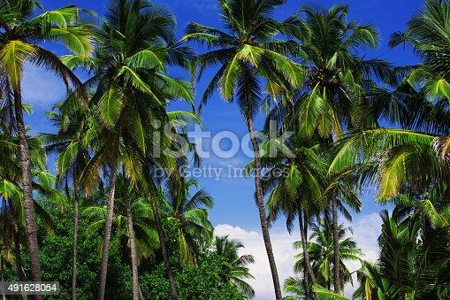1145102719istockphoto Palm trees 491628054