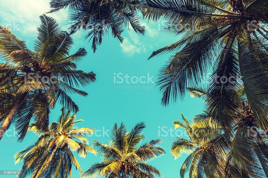 Palm Palmen – Foto