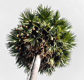 Low angle of palm trees with nests of housing