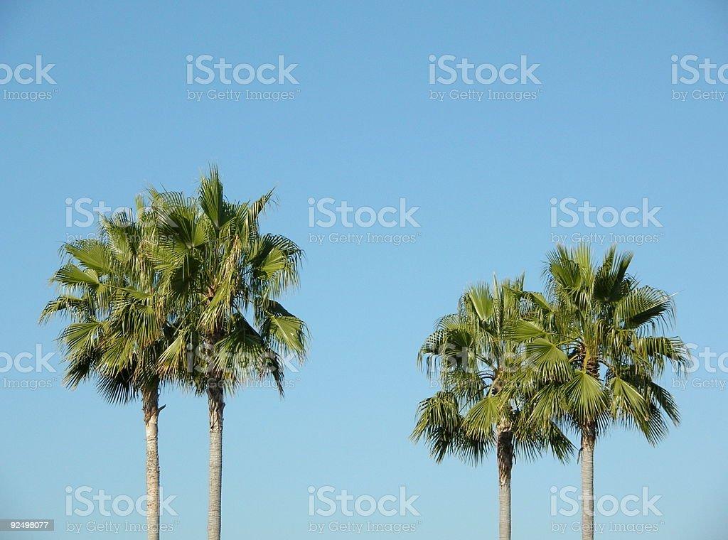 Palm trees. royalty-free stock photo
