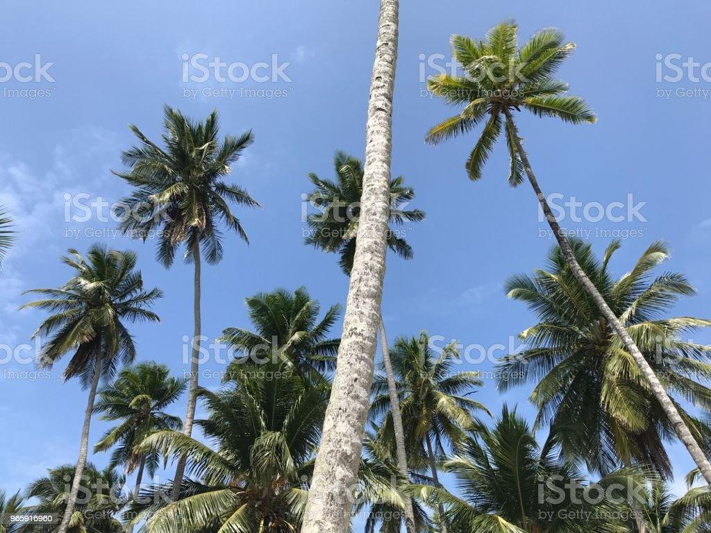 Palmbomen - Royalty-free Blauw Stockfoto