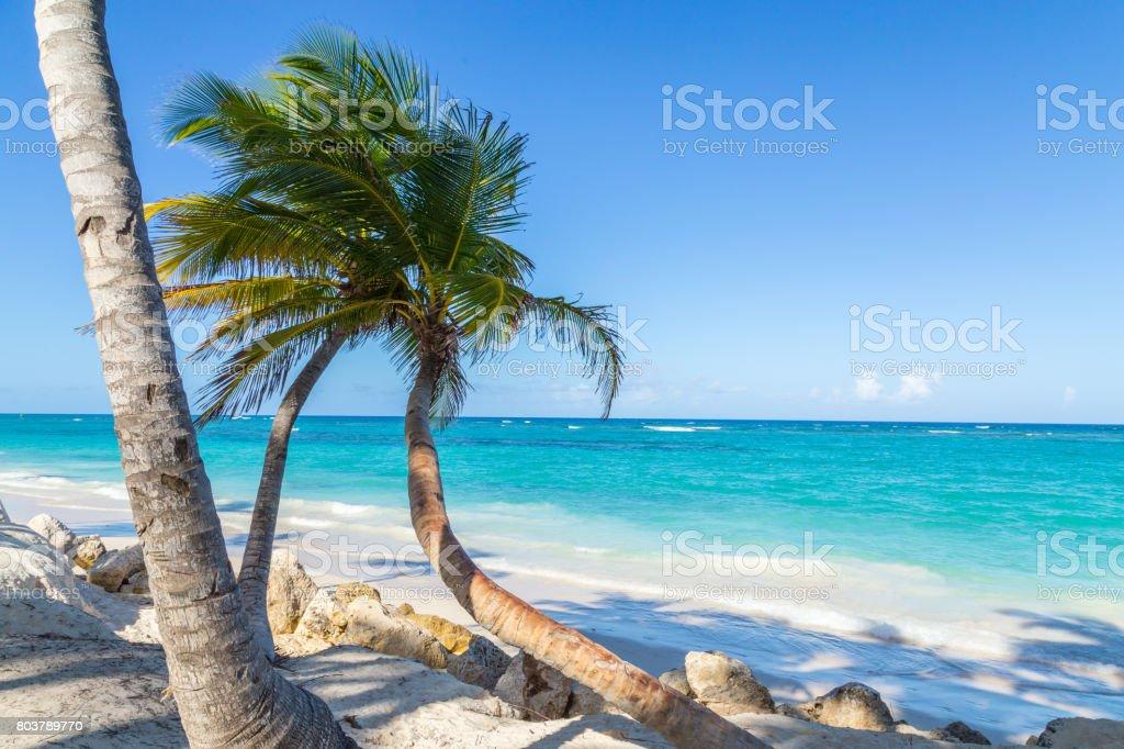 Palm trees Punta Cana Bavaro beach Dominican Republic stock photo