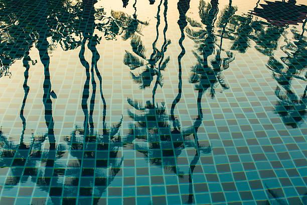 palmen, die sich im wasser des pools. - dubai urlaub stock-fotos und bilder