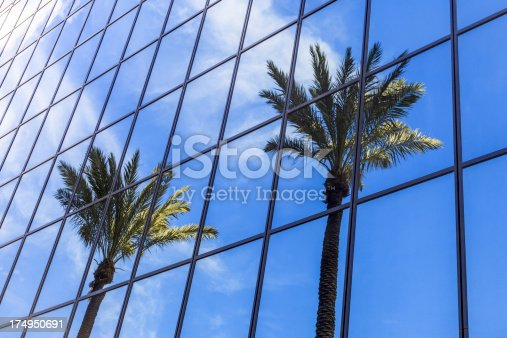 Picture of palm trees reflection on a glass office building. Photo was taken in 2012 and is high resolution.