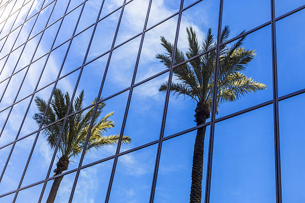 Palm Trees Reflection on Glass Office Building stock photo
