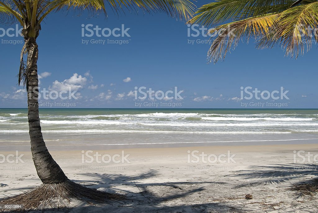Palm trees - relaxing scene stock photo