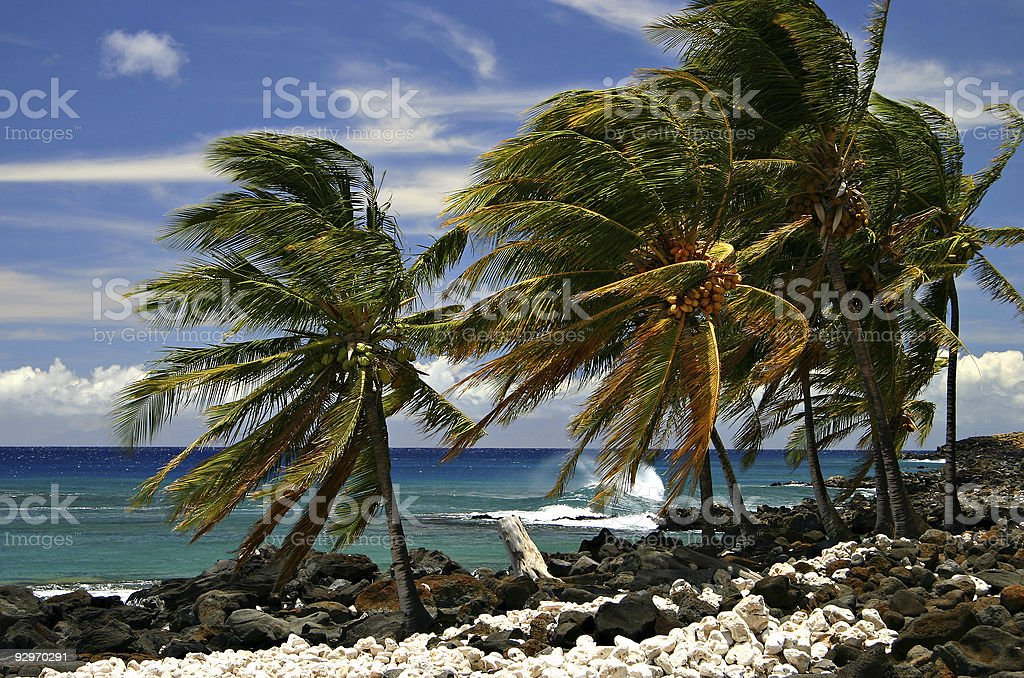 Palm Trees, Rocky Beach, Blue Sea and Skies - Hawaii stock photo