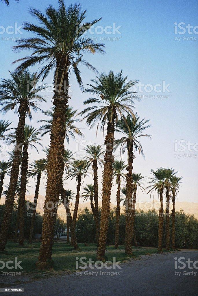 Palm trees, Santa Monica Boulevard, Los Angeles,USA stock photo