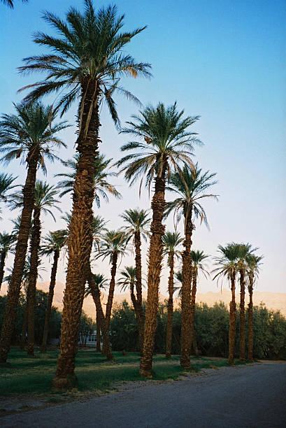 Palmen, Santa Monica Boulevard, Los Angeles, USA – Foto