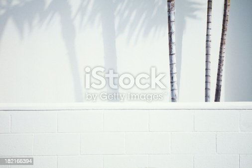 Palm trees against white wall