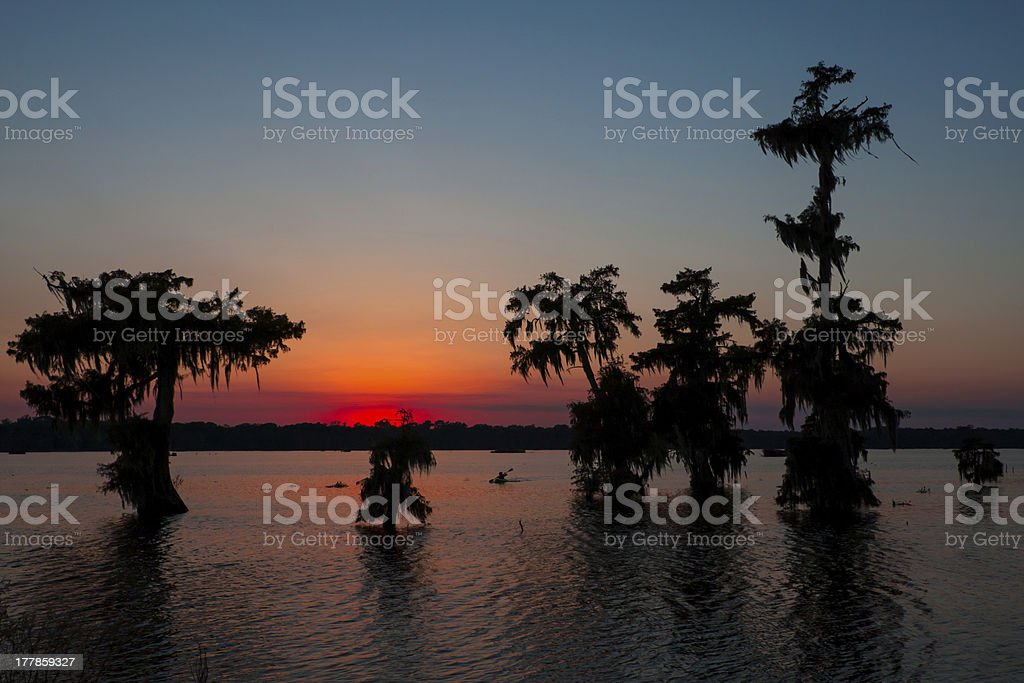 Palm trees silhouetted against the sunset in Kayak royalty-free stock photo