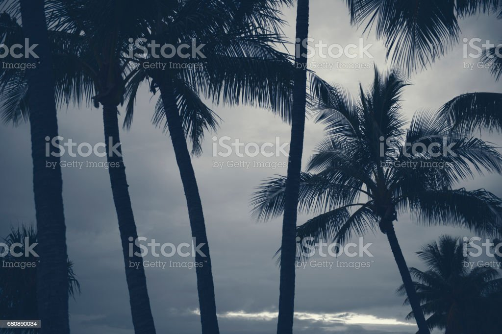 Palm trees silhouettes on the beach on a cloudy day. royalty-free stock photo