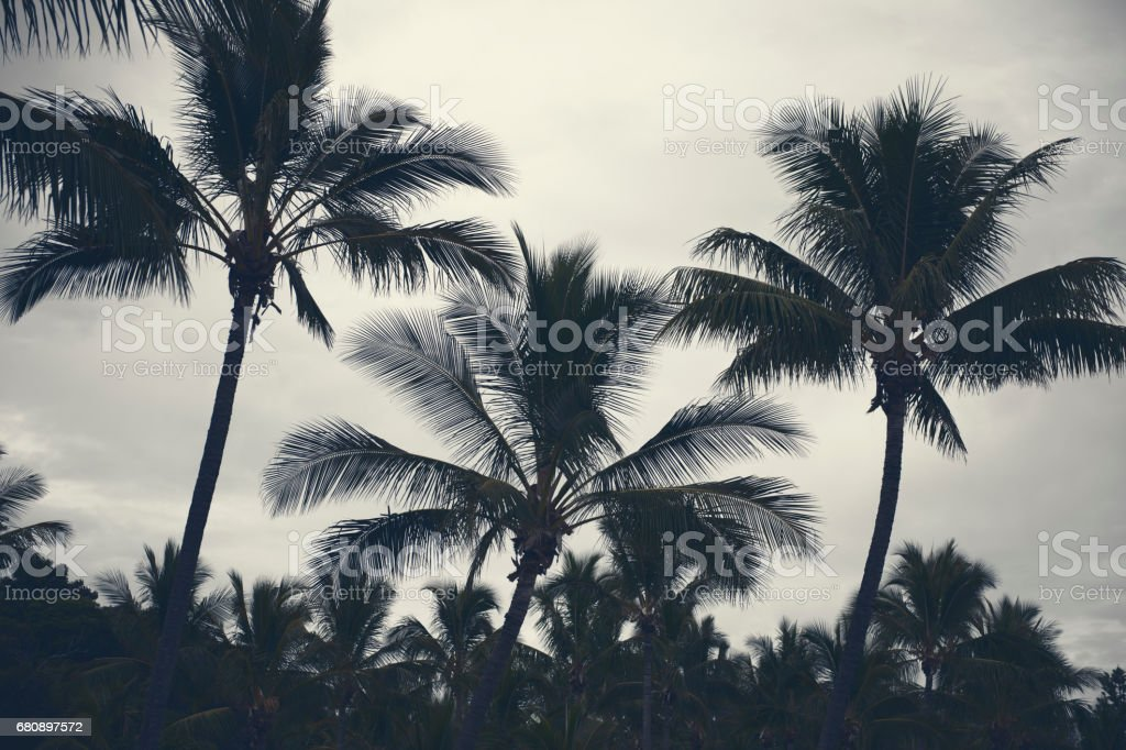 Palm trees silhouettes on the beach on a cloudy day. stock photo