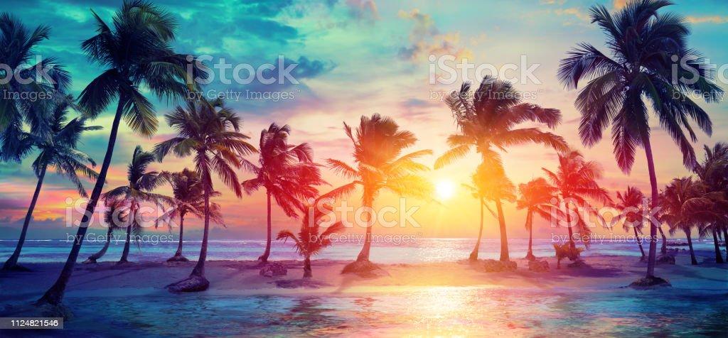 Palm bomen silhouetten op tropisch strand bij zonsondergang - Modern Vintage kleuren - Royalty-free Achtergrond - Thema Stockfoto