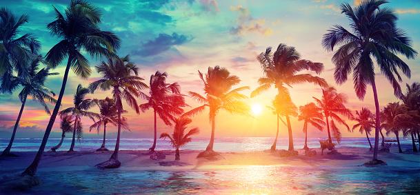 Palm Bomen Silhouetten Op Tropisch Strand Bij Zonsondergang Modern Vintage Kleuren Stockfoto en meer beelden van Achtergrond - Thema