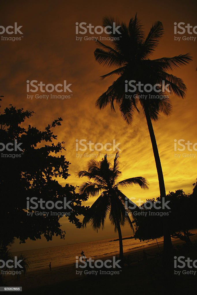 Palm trees silhoutted by the sunset on a deserted beach royalty-free stock photo