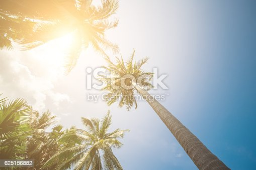Palm Trees Sun Light Hot Equator Nature Landscape Tropical Background Holiday Travel Design Toned Shabby Vintage Effect