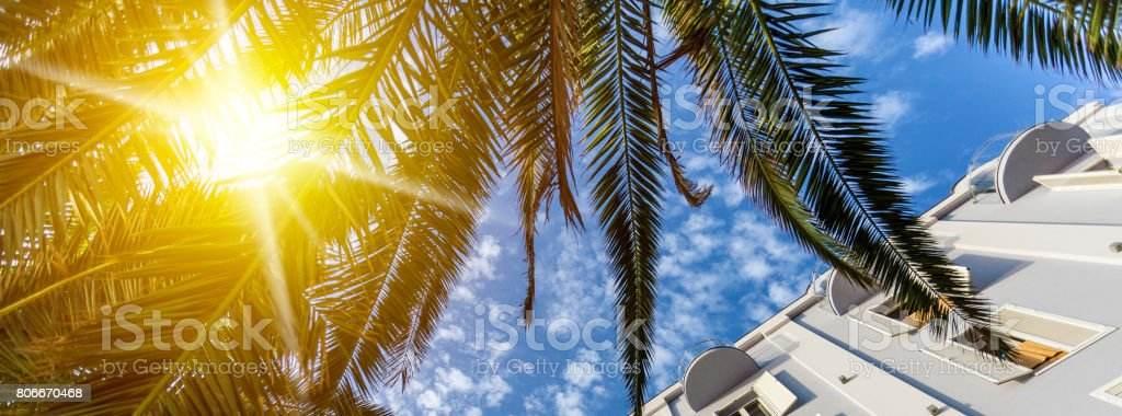 Palm trees sunshine and building facade stock photo