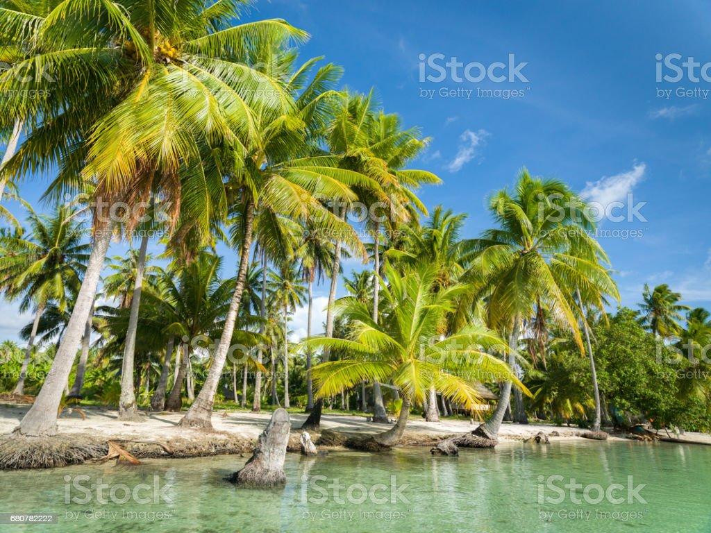 Palm Trees Tahaa Motu Natural Islet Beach Taha'a French Polynesia stock photo