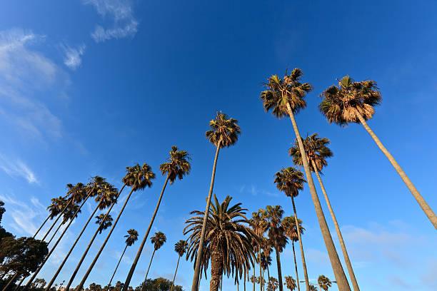 Palm Trees under a blue sky stock photo