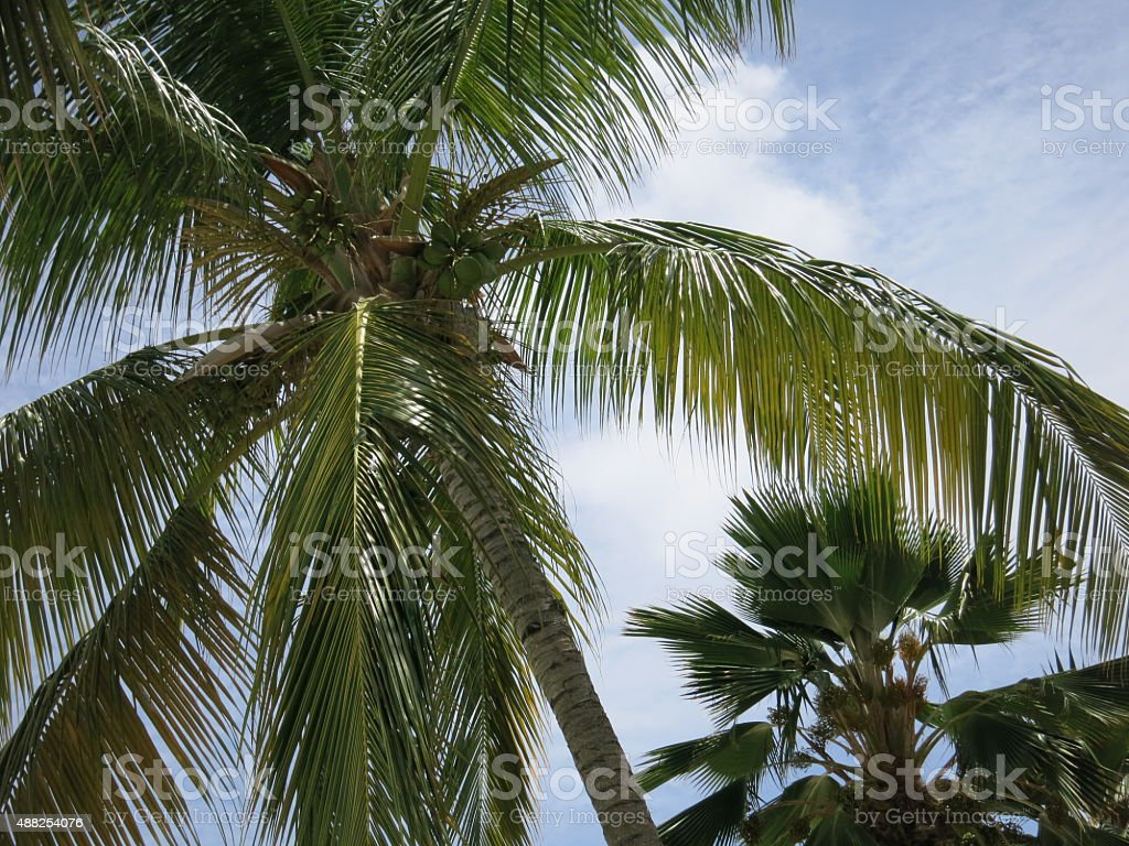 Palm Trees Under a Blue Sky stock photo