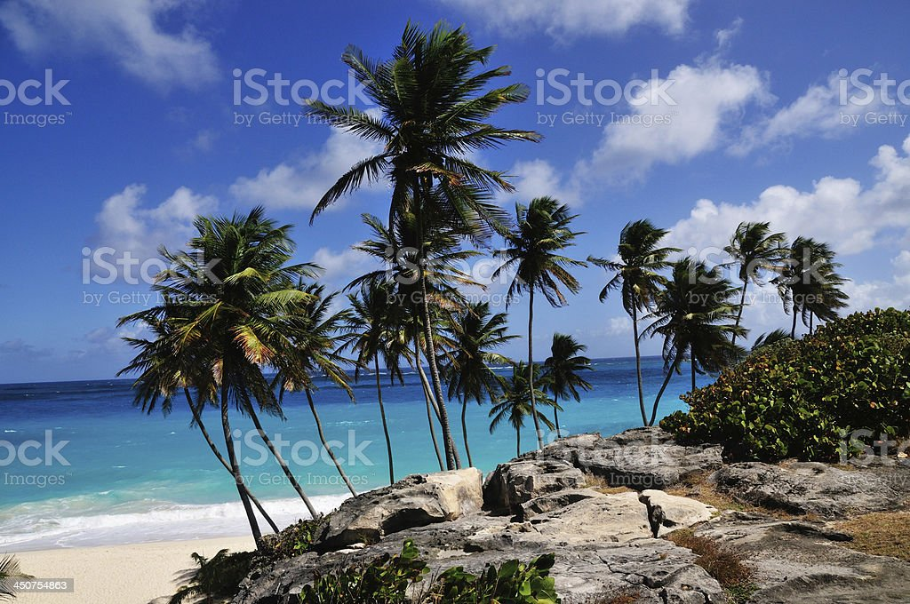 Palm Trees Under Beach Cliff - Royalty-free Barbados Stock Photo