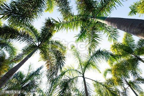 Palm trees under blue sky.