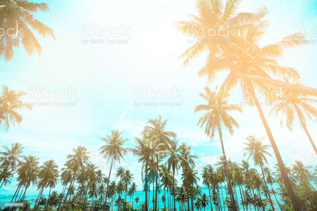 Palm trees vintage toned , Fashion, travel, summer, vacation and tropical beach . Creative made of green tree leaves. coconut palm trees stock photo