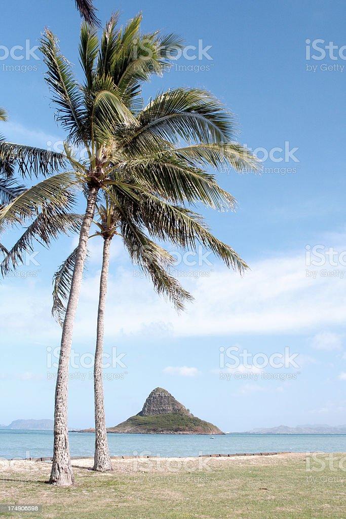 Palm trees with Mokolii Island stock photo