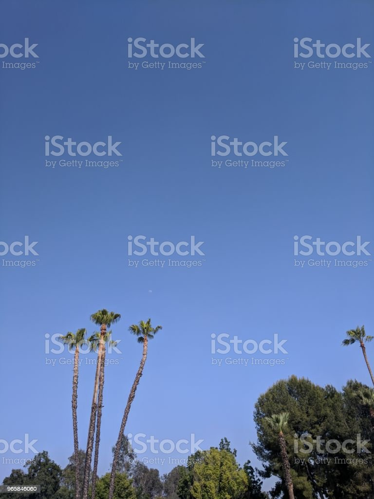 Palm trees with moon - Royalty-free Agricultural Field Stock Photo