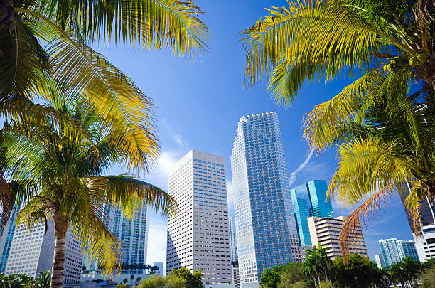 Palm trees with office buildings in Miami, FL stock photo