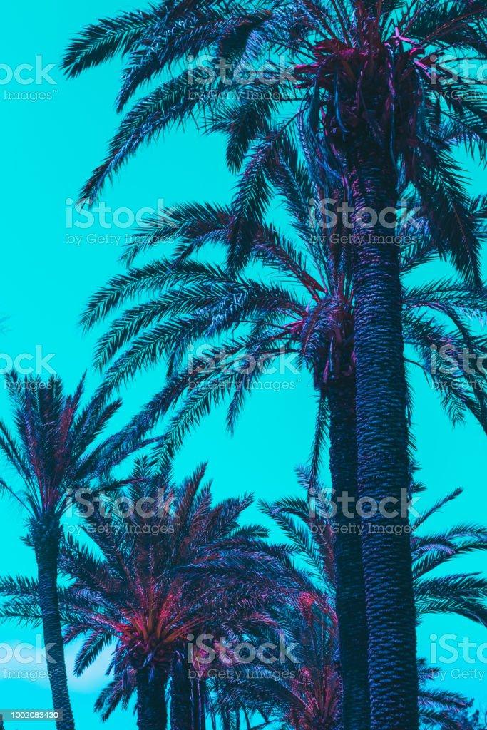 palmeiras com céu turquesa - foto de acervo