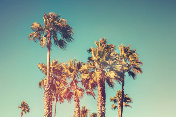 Palm trees with vintage retro color effect stock photo