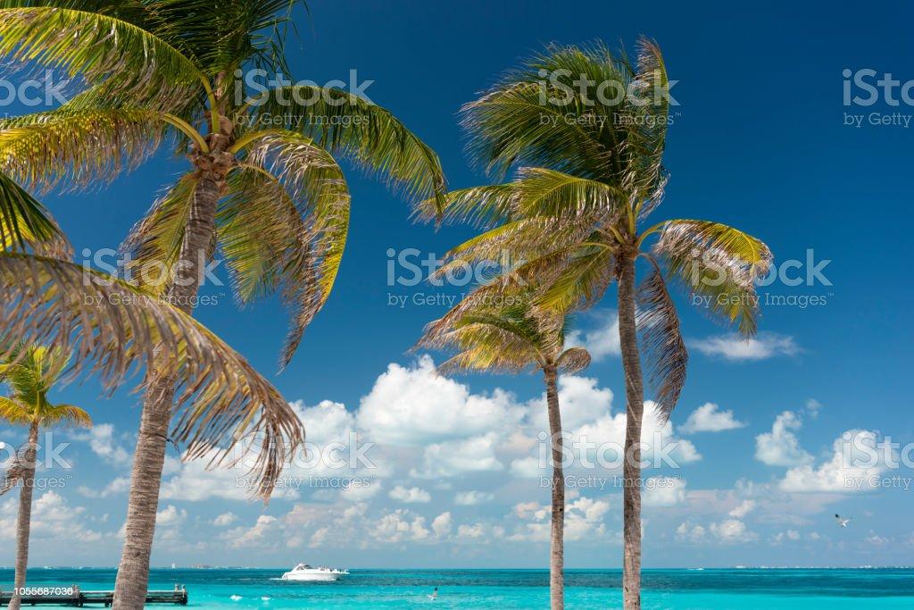 Palmen Sie, Yacht, türkisfarbenes Wasser, Cancun, Mexiko – Foto