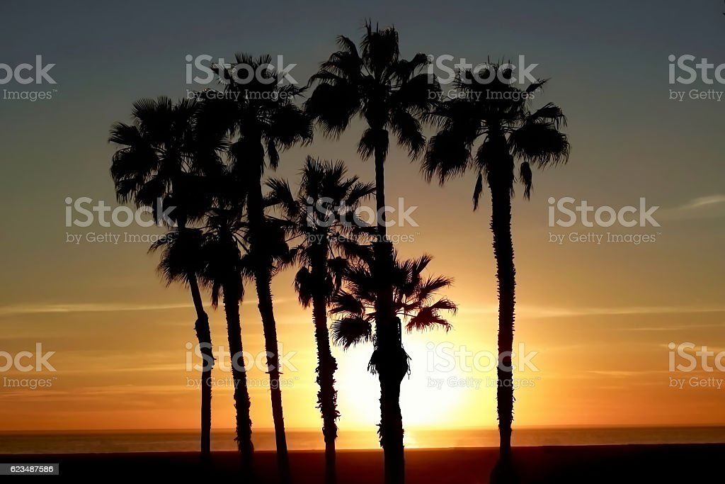 Palm Treescape at Sunset stock photo