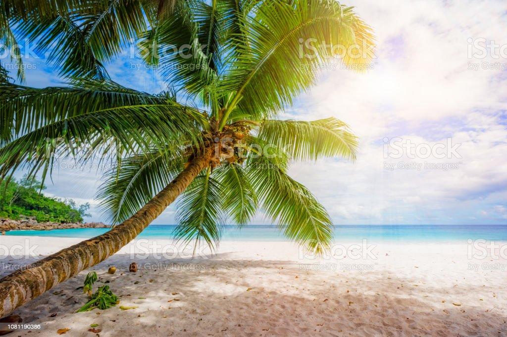 Palma, árbol, agua turquesa, arena blanca en playa tropical, paraíso en seychelles 3 x - foto de stock