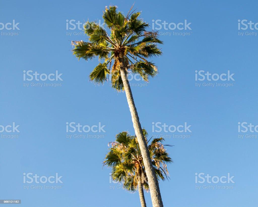 Palm Tress - Royalty-free Beach Stock Photo