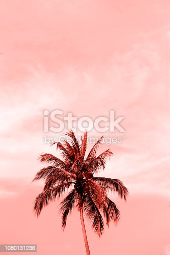 istock Palm tropical tree from bottom view to pure sky. 1080131236